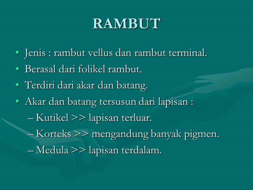 RAMBUT •Jenis : rambut vellus dan rambut terminal.