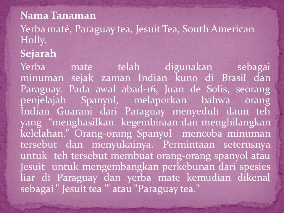  Nama Tanaman Yerba maté, Paraguay tea, Jesuit Tea, South American Holly.  Sejarah Yerba mate telah digunakan sebagai minuman sejak zaman Indian kun