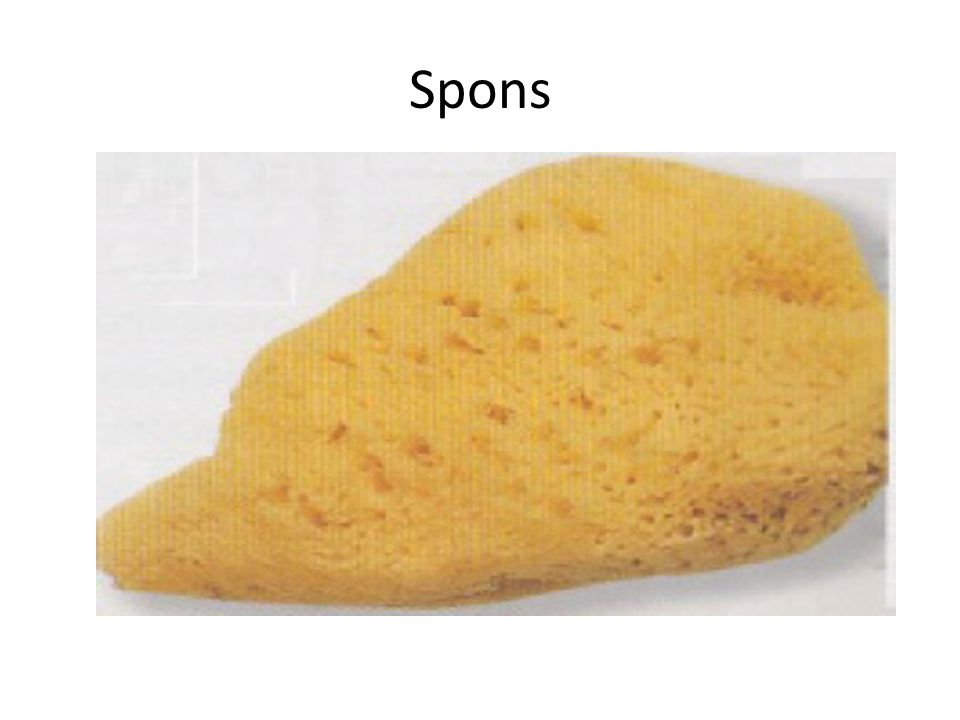 Spons