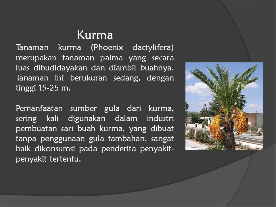 Kurma Tanaman kurma (Phoenix dactylifera) merupakan tanaman palma yang secara luas dibudidayakan dan diambil buahnya. Tanaman ini berukuran sedang, de