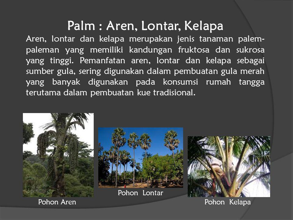 Palm : Aren, Lontar, Kelapa Aren, lontar dan kelapa merupakan jenis tanaman palem- paleman yang memiliki kandungan fruktosa dan sukrosa yang tinggi. P