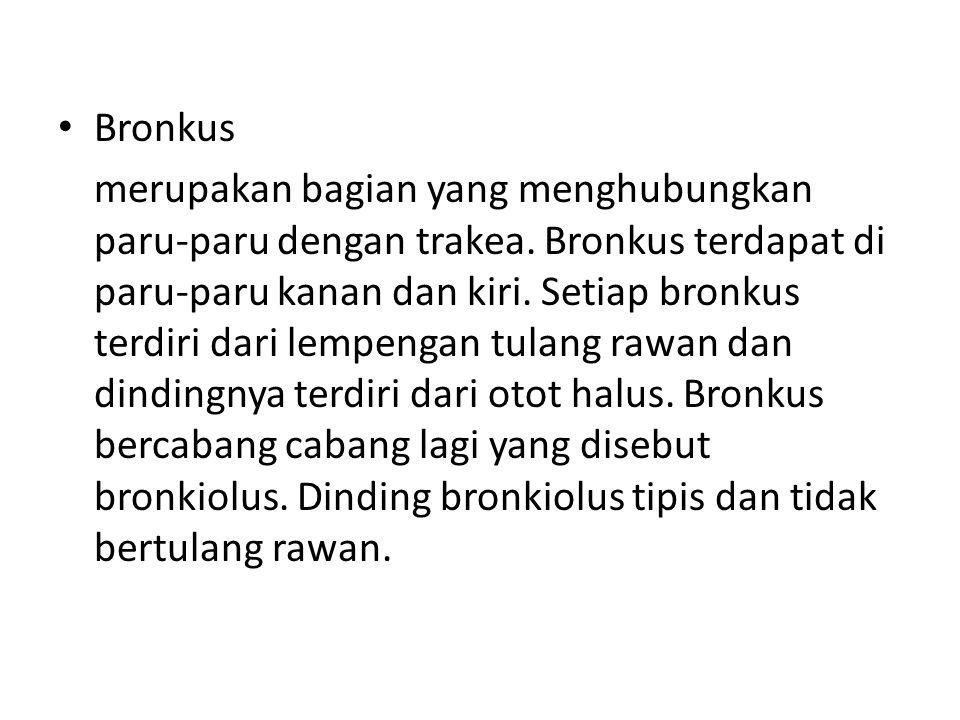 • Bronkus merupakan bagian yang menghubungkan paru-paru dengan trakea.