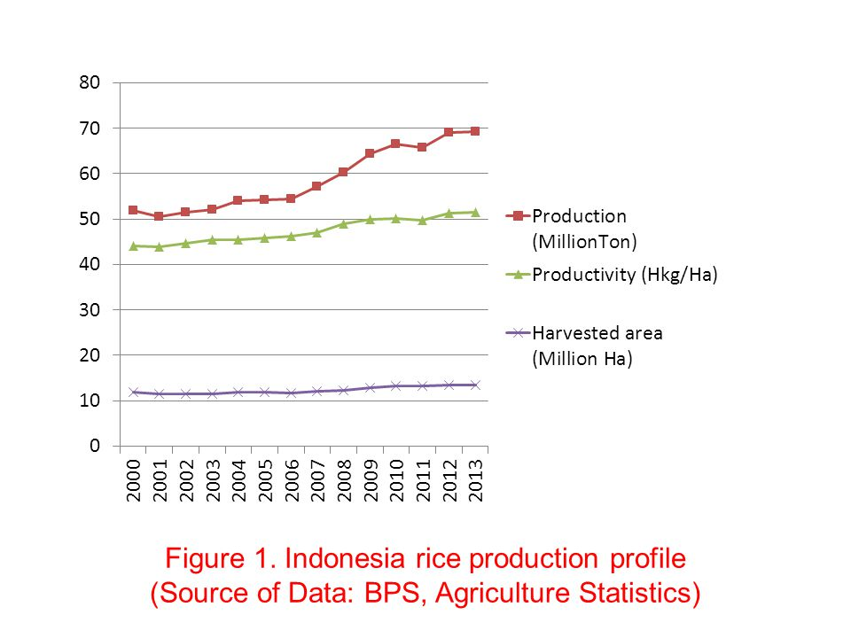 Figure 1. Indonesia rice production profile (Source of Data: BPS, Agriculture Statistics)