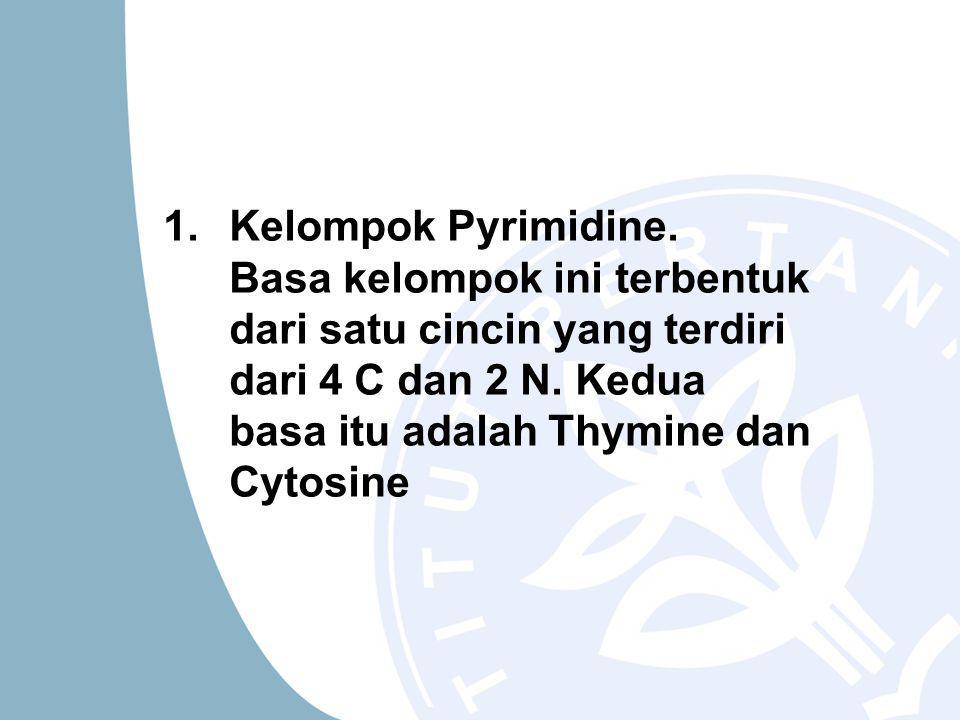 1.Kelompok Pyrimidine. Basa kelompok ini terbentuk dari satu cincin yang terdiri dari 4 C dan 2 N.