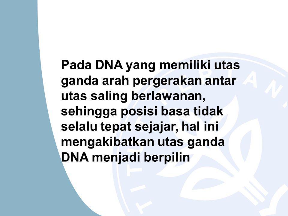 Pada DNA yang memiliki utas ganda arah pergerakan antar utas saling berlawanan, sehingga posisi basa tidak selalu tepat sejajar, hal ini mengakibatkan utas ganda DNA menjadi berpilin