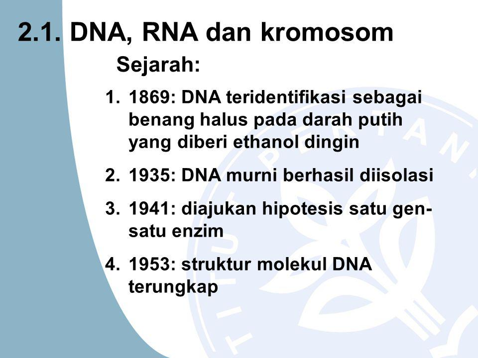 Susunan basa dari dari suatu fragment DNA hasil analisis mesin DNA sequencer