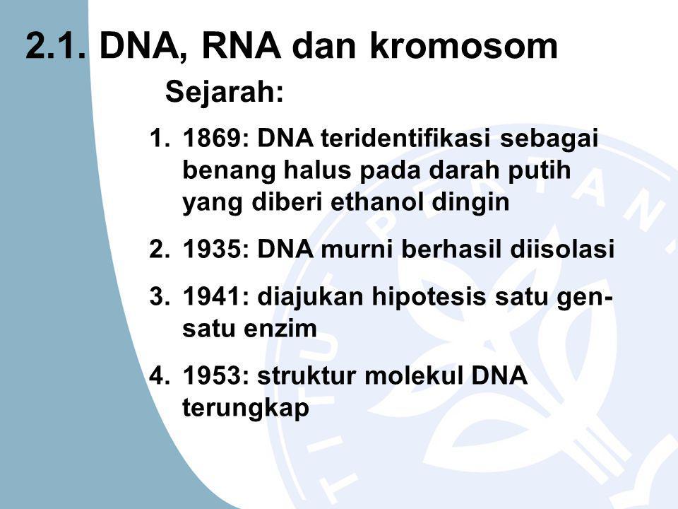 1.1869: DNA teridentifikasi sebagai benang halus pada darah putih yang diberi ethanol dingin 2.1935: DNA murni berhasil diisolasi 3.1941: diajukan hipotesis satu gen- satu enzim 4.1953: struktur molekul DNA terungkap Sejarah: 2.1.