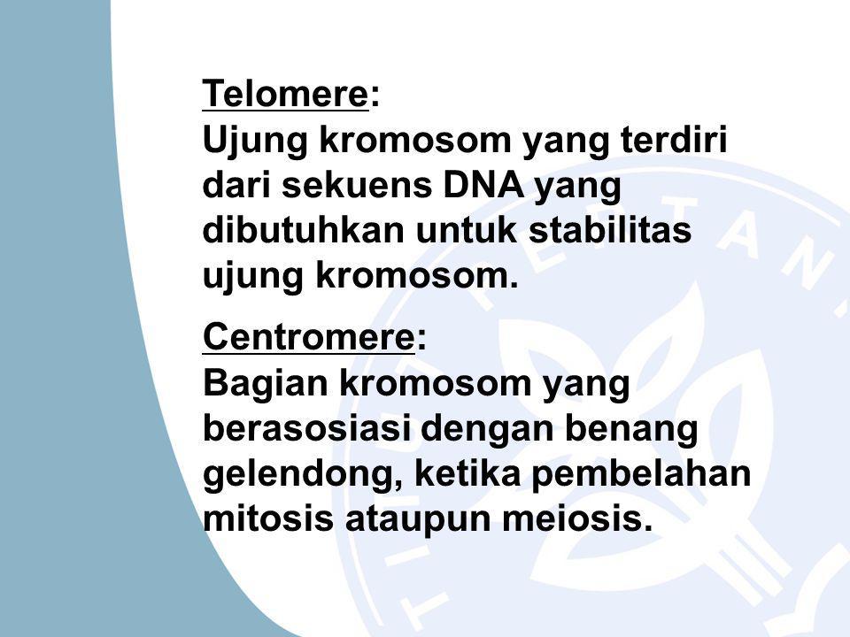 Centromere: Bagian kromosom yang berasosiasi dengan benang gelendong, ketika pembelahan mitosis ataupun meiosis.