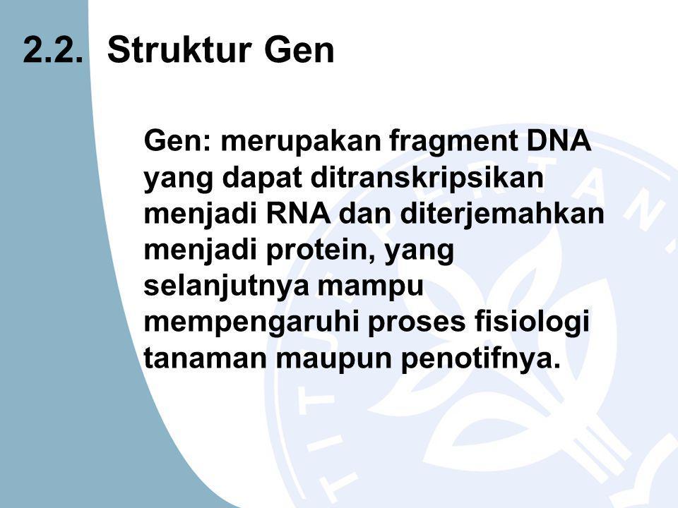 Gen: merupakan fragment DNA yang dapat ditranskripsikan menjadi RNA dan diterjemahkan menjadi protein, yang selanjutnya mampu mempengaruhi proses fisiologi tanaman maupun penotifnya.