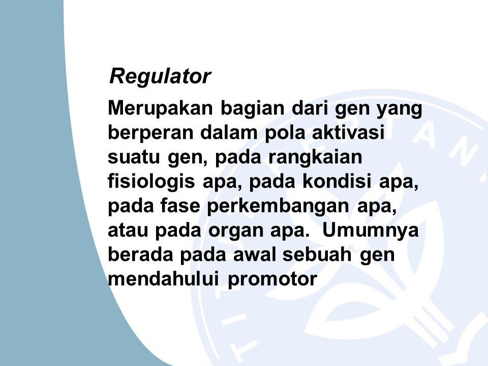 Regulator Merupakan bagian dari gen yang berperan dalam pola aktivasi suatu gen, pada rangkaian fisiologis apa, pada kondisi apa, pada fase perkembangan apa, atau pada organ apa.
