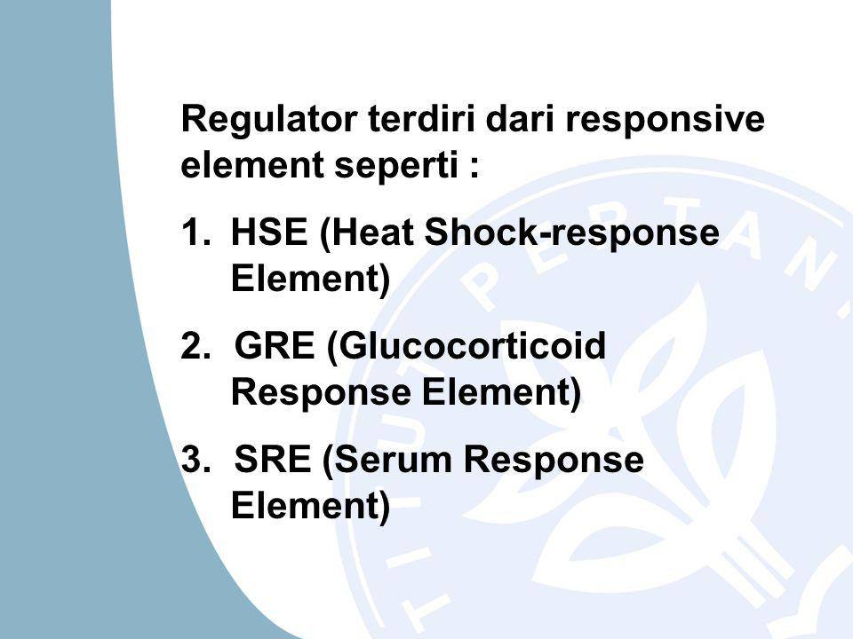 Regulator terdiri dari responsive element seperti : 1.HSE (Heat Shock-response Element) 2.
