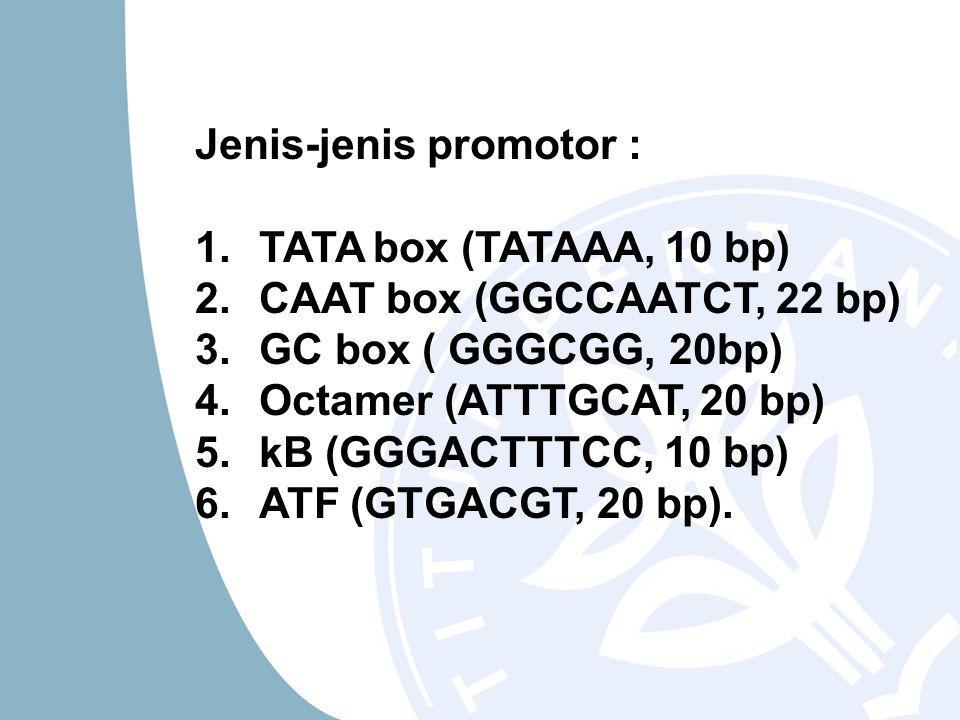 Jenis-jenis promotor : 1.TATA box (TATAAA, 10 bp) 2.CAAT box (GGCCAATCT, 22 bp) 3.GC box ( GGGCGG, 20bp) 4.Octamer (ATTTGCAT, 20 bp) 5.kB (GGGACTTTCC, 10 bp) 6.ATF (GTGACGT, 20 bp).