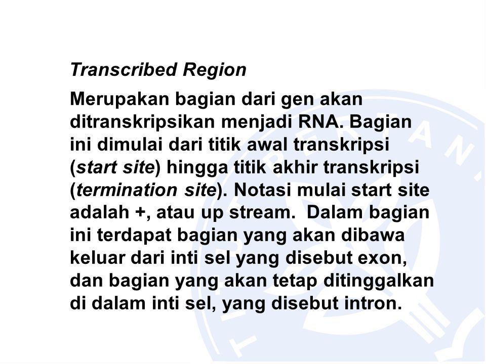 Transcribed Region Merupakan bagian dari gen akan ditranskripsikan menjadi RNA.