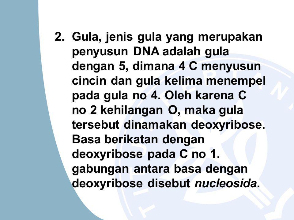 2.Gula, jenis gula yang merupakan penyusun DNA adalah gula dengan 5, dimana 4 C menyusun cincin dan gula kelima menempel pada gula no 4.