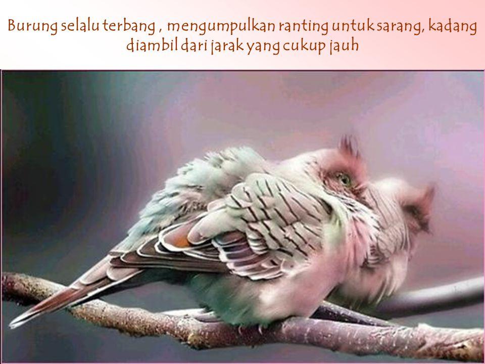 Apakah anda pernah memperhatikan burung Terutama saat menghadapi fase bertelur