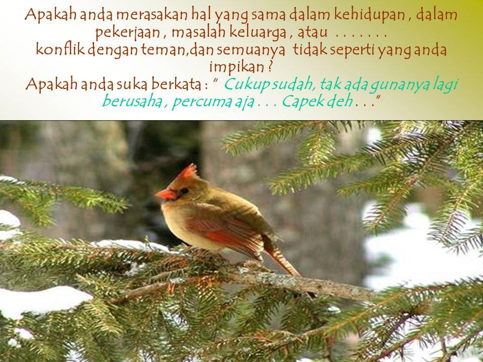 Mereka memulai lagi dari NOL... Sang burung tidak pernah mengeluh dan berhenti, terbang... Membangun sarang dan selalu bernyayi.