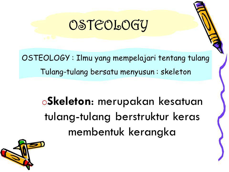 OSTEOLOGY OSTEOLOGY : Ilmu yang mempelajari tentang tulang Tulang-tulang bersatu menyusun : skeleton  Skeleton: merupakan kesatuan tulang-tulang berstruktur keras membentuk kerangka