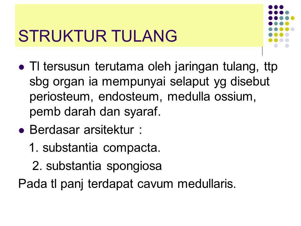 STRUKTUR TULANG  Tl tersusun terutama oleh jaringan tulang, ttp sbg organ ia mempunyai selaput yg disebut periosteum, endosteum, medulla ossium, pemb darah dan syaraf.