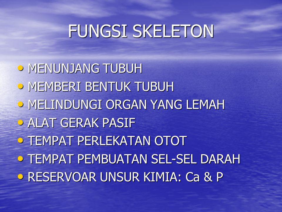 FUNGSI SKELETON • MENUNJANG TUBUH • MEMBERI BENTUK TUBUH • MELINDUNGI ORGAN YANG LEMAH • ALAT GERAK PASIF • TEMPAT PERLEKATAN OTOT • TEMPAT PEMBUATAN SEL-SEL DARAH • RESERVOAR UNSUR KIMIA: Ca & P
