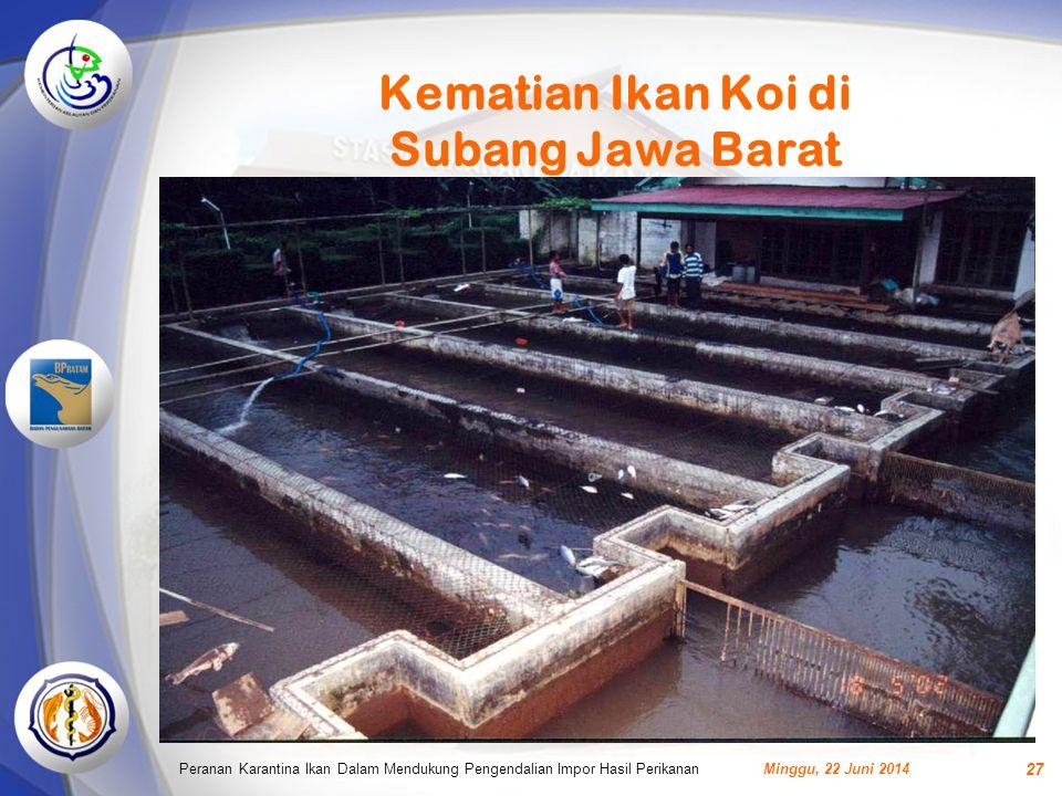 Kematian Ikan Koi di Subang Jawa Barat Minggu, 22 Juni 2014Peranan Karantina Ikan Dalam Mendukung Pengendalian Impor Hasil Perikanan 27