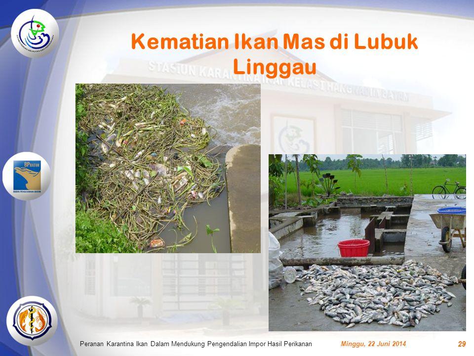 Kematian Ikan Mas di Lubuk Linggau Minggu, 22 Juni 2014Peranan Karantina Ikan Dalam Mendukung Pengendalian Impor Hasil Perikanan 29