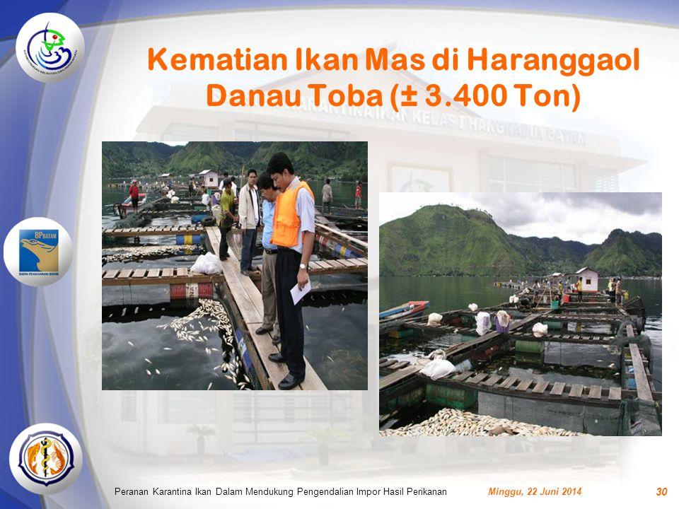 Kematian Ikan Mas di Haranggaol Danau Toba (± 3.400 Ton) Minggu, 22 Juni 2014Peranan Karantina Ikan Dalam Mendukung Pengendalian Impor Hasil Perikanan 30