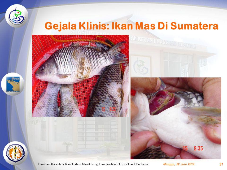 Gejala Klinis: Ikan Mas Di Sumatera Minggu, 22 Juni 2014Peranan Karantina Ikan Dalam Mendukung Pengendalian Impor Hasil Perikanan 31