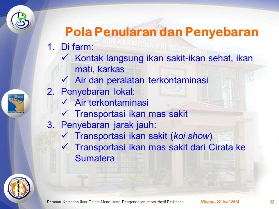 Pola Penularan dan Penyebaran Minggu, 22 Juni 2014Peranan Karantina Ikan Dalam Mendukung Pengendalian Impor Hasil Perikanan 32 1.Di farm:  Kontak langsung ikan sakit-ikan sehat, ikan mati, karkas  Air dan peralatan terkontaminasi 2.Penyebaran lokal:  Air terkontaminasi  Transportasi ikan mas sakit 3.Penyebaran jarak jauh:  Transportasi ikan sakit (koi show)  Transportasi ikan mas sakit dari Cirata ke Sumatera