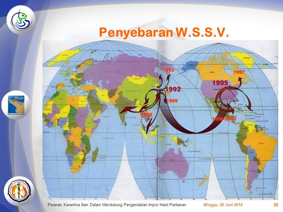 Penyebaran W.S.S.V.