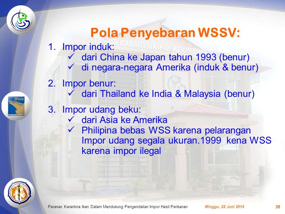 Pola Penyebaran WSSV: Minggu, 22 Juni 2014Peranan Karantina Ikan Dalam Mendukung Pengendalian Impor Hasil Perikanan 36 1.Impor induk:  dari China ke Japan tahun 1993 (benur)  di negara-negara Amerika (induk & benur) 2.Impor benur:  dari Thailand ke India & Malaysia (benur) 3.Impor udang beku:  dari Asia ke Amerika  Philipina bebas WSS karena pelarangan Impor udang segala ukuran.1999 kena WSS karena impor ilegal