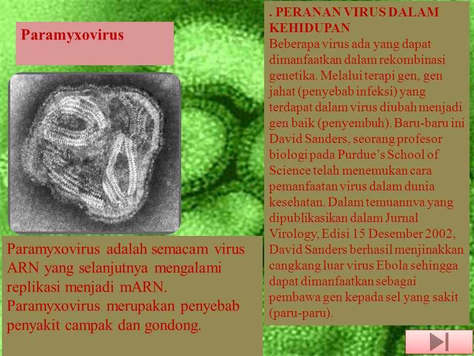 Paramyxovirus Paramyxovirus adalah semacam virus ARN yang selanjutnya mengalami replikasi menjadi mARN. Paramyxovirus merupakan penyebab penyakit camp