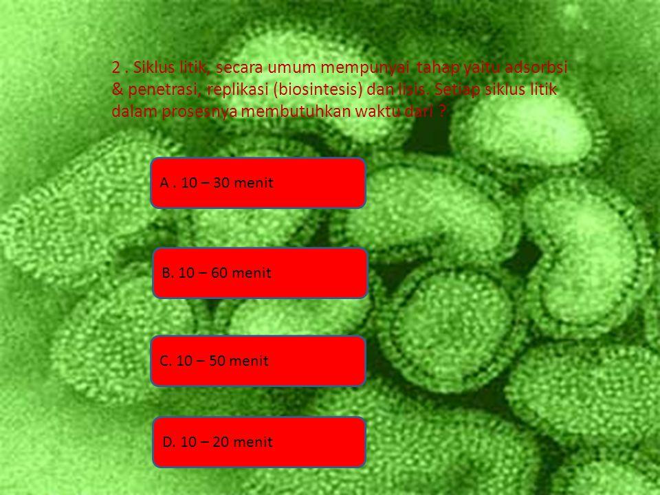 2. Siklus litik, secara umum mempunyai tahap yaitu adsorbsi & penetrasi, replikasi (biosintesis) dan lisis. Setiap siklus litik dalam prosesnya membut