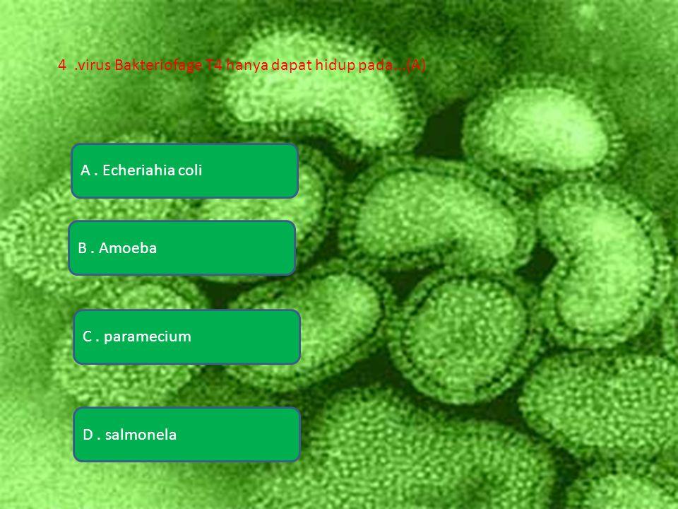 A.Echeriahia coli D. salmonela B. Amoeba C.