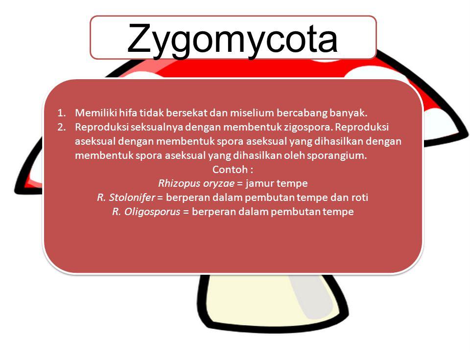 KLASIFIKASI JAMUR Zygomycota Ascomycota Basidiomycota Deuteromycota