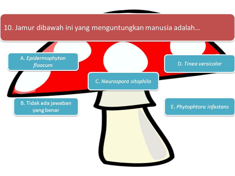 A. 1 B. 2 C. 3 E.5 D. 4 9. Hifa pada jamur dapat dibagi menjadi?....