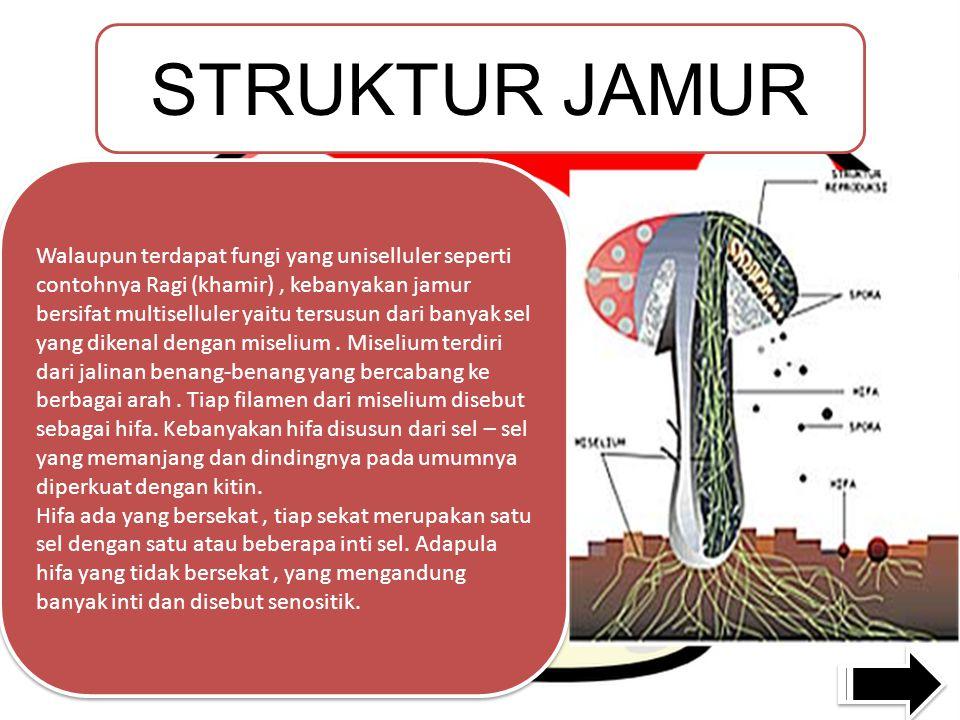 STRUKTUR JAMUR Walaupun terdapat fungi yang uniselluler seperti contohnya Ragi (khamir), kebanyakan jamur bersifat multiselluler yaitu tersusun dari banyak sel yang dikenal dengan miselium.