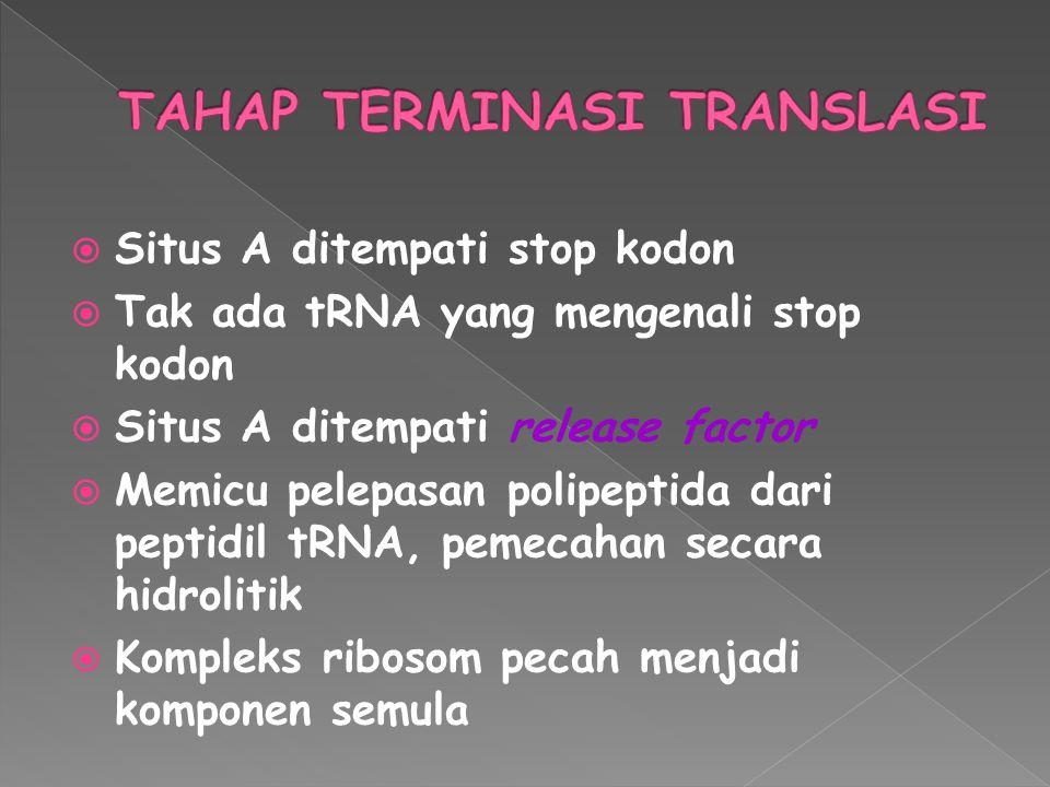  Situs A ditempati stop kodon  Tak ada tRNA yang mengenali stop kodon  Situs A ditempati release factor  Memicu pelepasan polipeptida dari peptidi
