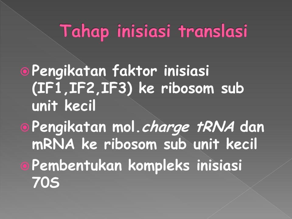  Pengikatan faktor inisiasi (IF1,IF2,IF3) ke ribosom sub unit kecil  Pengikatan mol.charge tRNA dan mRNA ke ribosom sub unit kecil  Pembentukan kom