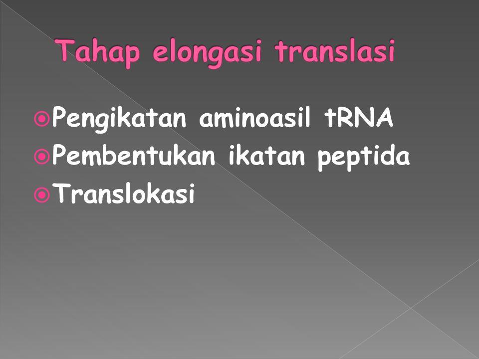  Pengikatan aminoasil tRNA  Pembentukan ikatan peptida  Translokasi