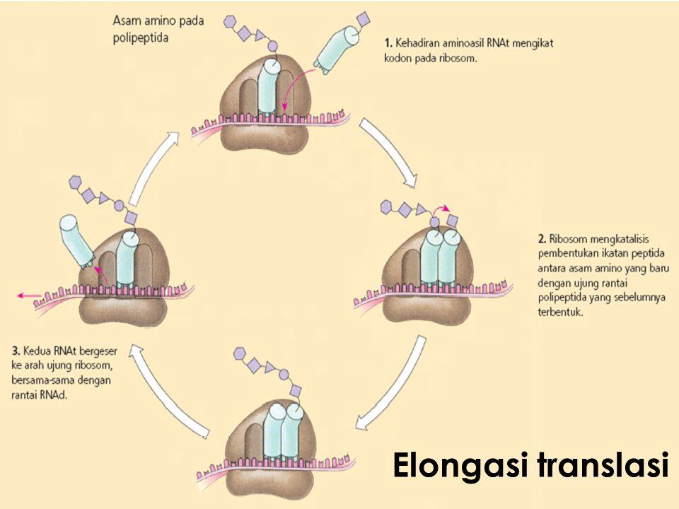  Terdapat di mRNA  Mengkode spesifisitas asam amino penyusun protein  Terdiri dari 3 nukleotida (triplet)  kodon  Total ada 64 kodon  3 kodon (UAA, UAG, UGA) : kodon terminasi  Hampir universal  Akan dikenal oleh antikodon pd tRNA