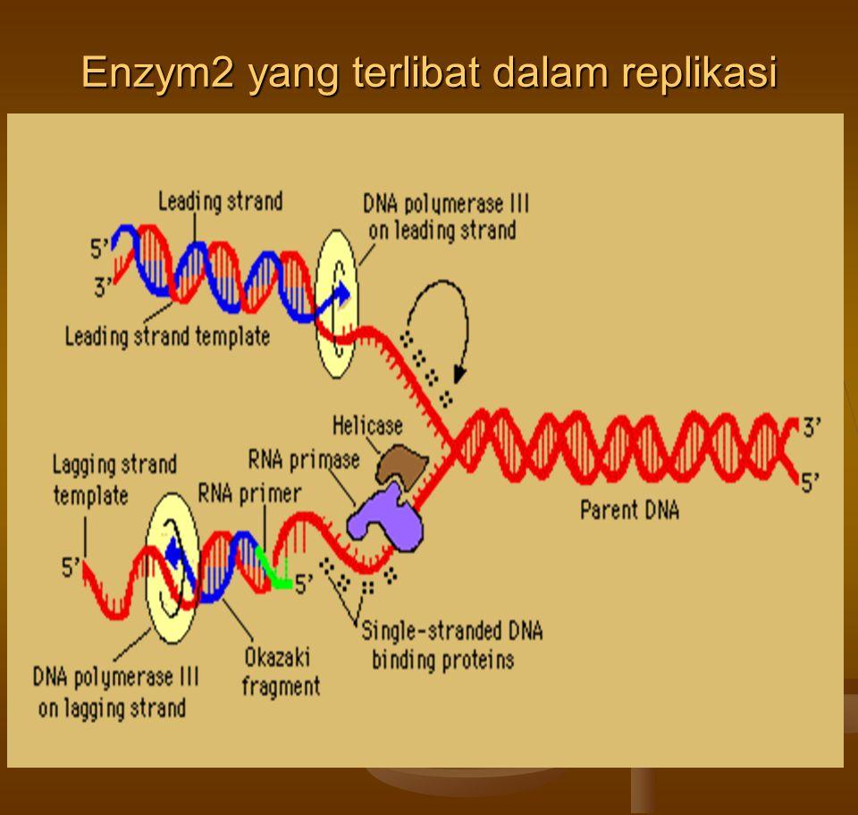 Enzym2 yang terlibat dalam replikasi