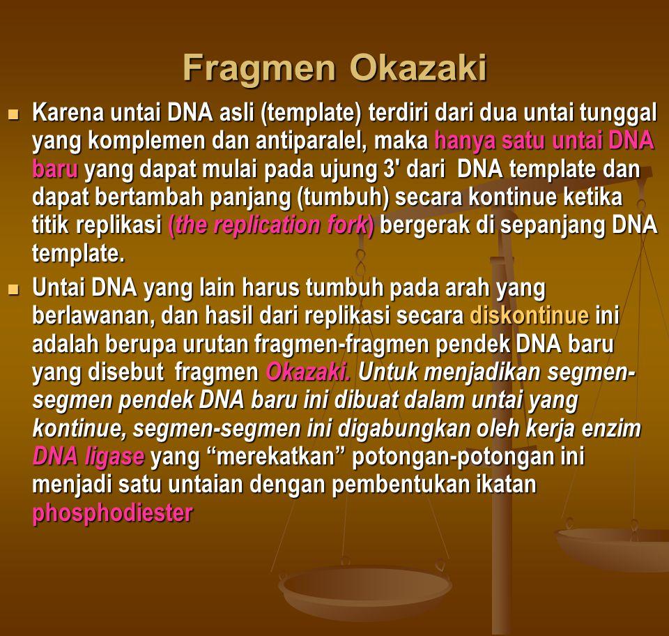 Fragmen Okazaki  Karena untai DNA asli (template) terdiri dari dua untai tunggal yang komplemen dan antiparalel, maka hanya satu untai DNA baru yang