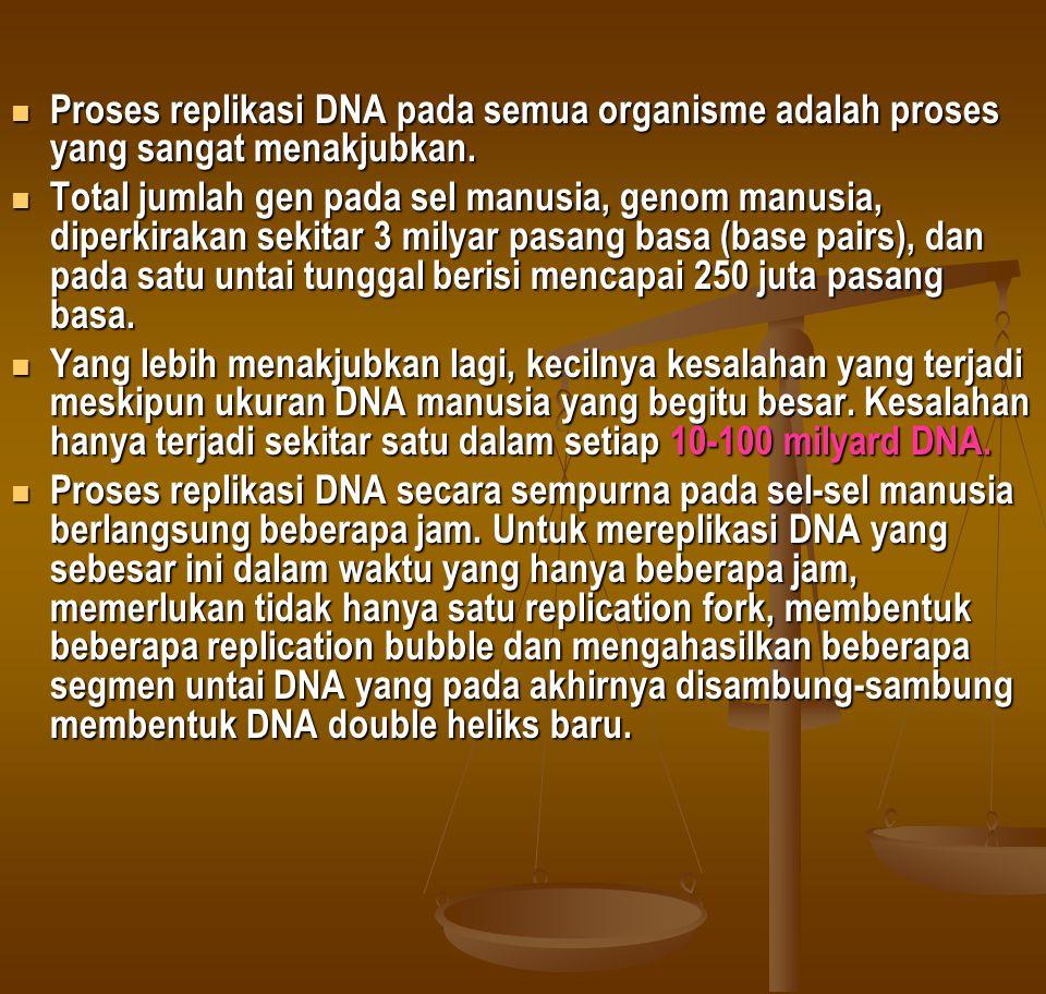  Proses replikasi DNA pada semua organisme adalah proses yang sangat menakjubkan.  Total jumlah gen pada sel manusia, genom manusia, diperkirakan se