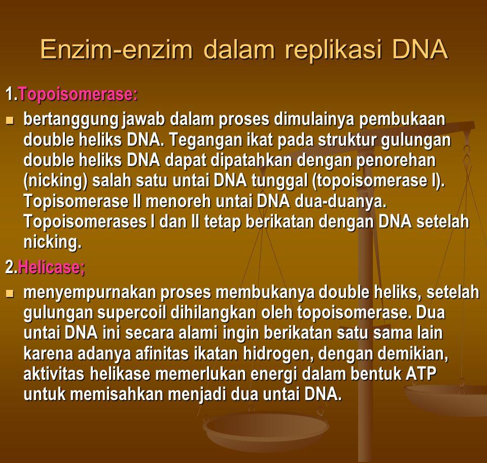 Enzim-enzim dalam replikasi DNA 1.Topoisomerase:  bertanggung jawab dalam proses dimulainya pembukaan double heliks DNA. Tegangan ikat pada struktur