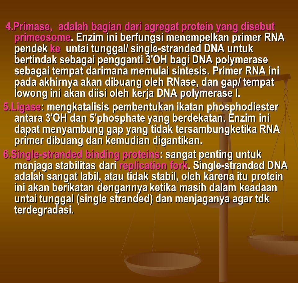 4.Primase, adalah bagian dari agregat protein yang disebut primeosome. Enzim ini berfungsi menempelkan primer RNA pendek ke untai tunggal/ single-stra