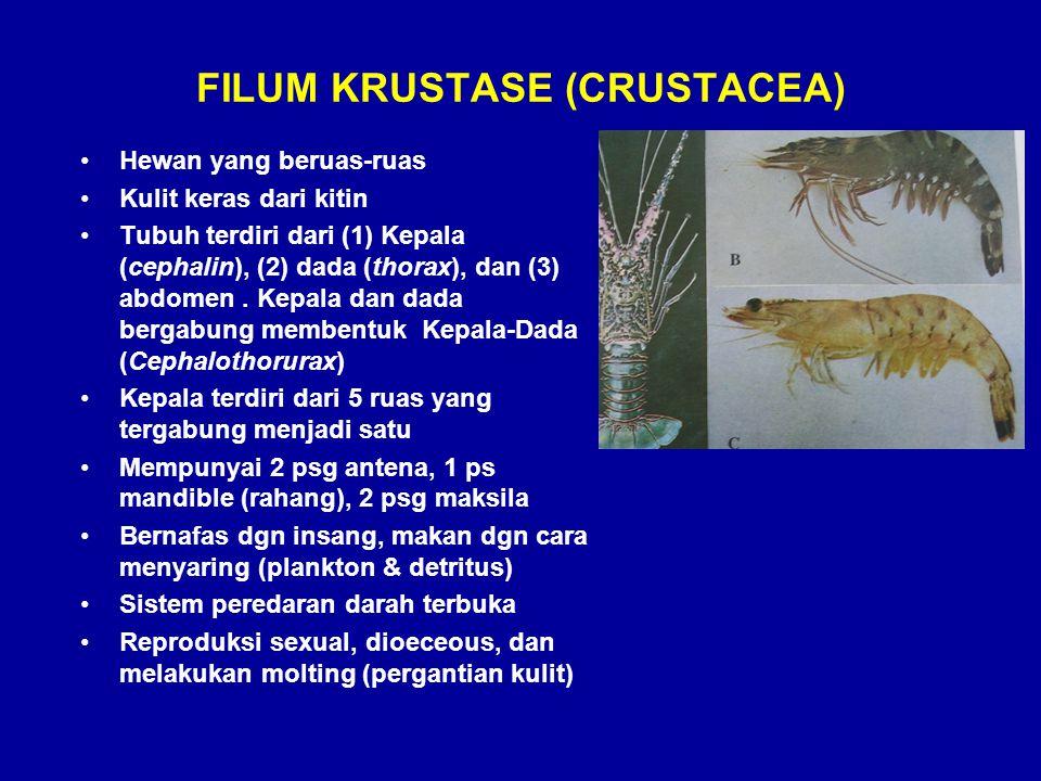 FILUM KRUSTASE (CRUSTACEA) •Hewan yang beruas-ruas •Kulit keras dari kitin •Tubuh terdiri dari (1) Kepala (cephalin), (2) dada (thorax), dan (3) abdom