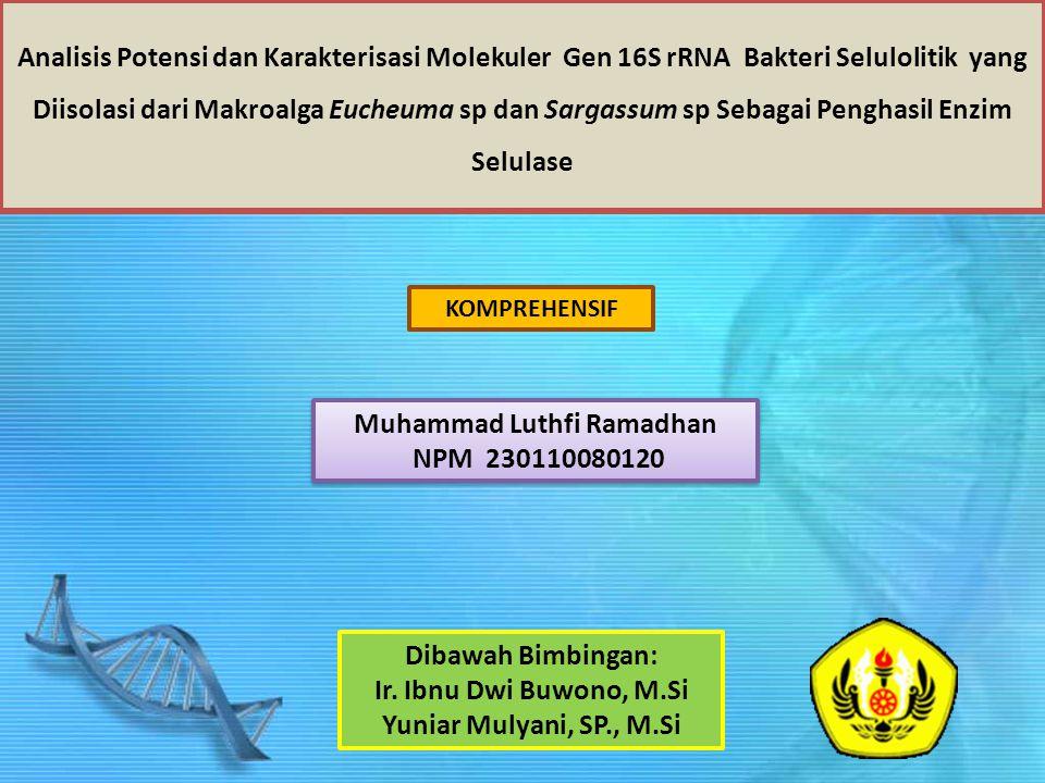 Analisis Potensi dan Karakterisasi Molekuler Gen 16S rRNA Bakteri Selulolitik yang Diisolasi dari Makroalga Eucheuma sp dan Sargassum sp Sebagai Penghasil Enzim Selulase Muhammad Luthfi Ramadhan NPM 230110080120 Dibawah Bimbingan: Ir.