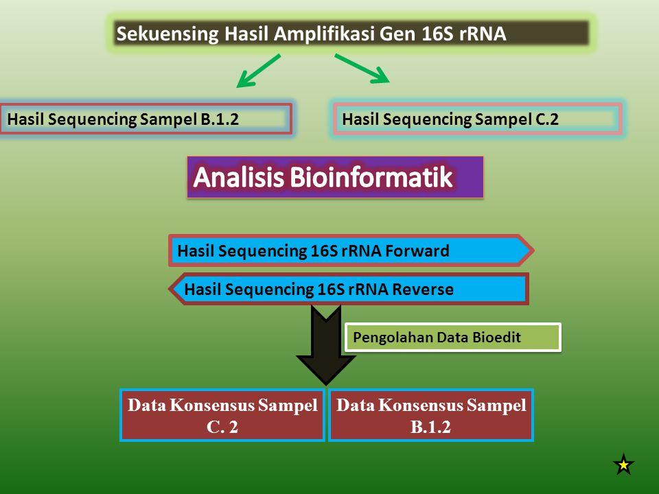 Sekuensing Hasil Amplifikasi Gen 16S rRNA Hasil Sequencing Sampel B.1.2 Hasil Sequencing 16S rRNA Forward Hasil Sequencing 16S rRNA Reverse Data Konsensus Sampel B.1.2 Hasil Sequencing Sampel C.2 Data Konsensus Sampel C.