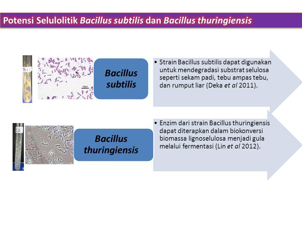 •Enzim dari strain Bacillus thuringiensis dapat diterapkan dalam biokonversi biomassa lignoselulosa menjadi gula melalui fermentasi (Lin et al 2012).