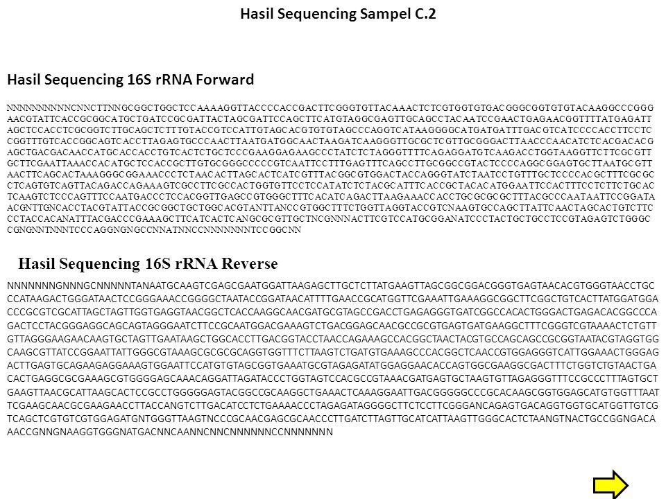 Hasil Sequencing Sampel C.2 Hasil Sequencing 16S rRNA Forward NNNNNNNNNNCNNCTTNNGCGGCTGGCTCCAAAAGGTTACCCCACCGACTTCGGGTGTTACAAACTCTCGTGGTGTGACGGGCGGTGTGTACAAGGCCCGGG AACGTATTCACCGCGGCATGCTGATCCGCGATTACTAGCGATTCCAGCTTCATGTAGGCGAGTTGCAGCCTACAATCCGAACTGAGAACGGTTTTATGAGATT AGCTCCACCTCGCGGTCTTGCAGCTCTTTGTACCGTCCATTGTAGCACGTGTGTAGCCCAGGTCATAAGGGGCATGATGATTTGACGTCATCCCCACCTTCCTC CGGTTTGTCACCGGCAGTCACCTTAGAGTGCCCAACTTAATGATGGCAACTAAGATCAAGGGTTGCGCTCGTTGCGGGACTTAACCCAACATCTCACGACACG AGCTGACGACAACCATGCACCACCTGTCACTCTGCTCCCGAAGGAGAAGCCCTATCTCTAGGGTTTTCAGAGGATGTCAAGACCTGGTAAGGTTCTTCGCGTT GCTTCGAATTAAACCACATGCTCCACCGCTTGTGCGGGCCCCCGTCAATTCCTTTGAGTTTCAGCCTTGCGGCCGTACTCCCCAGGCGGAGTGCTTAATGCGTT AACTTCAGCACTAAAGGGCGGAAACCCTCTAACACTTAGCACTCATCGTTTACGGCGTGGACTACCAGGGTATCTAATCCTGTTTGCTCCCCACGCTTTCGCGC CTCAGTGTCAGTTACAGACCAGAAAGTCGCCTTCGCCACTGGTGTTCCTCCATATCTCTACGCATTTCACCGCTACACATGGAATTCCACTTTCCTCTTCTGCAC TCAAGTCTCCCAGTTTCCAATGACCCTCCACGGTTGAGCCGTGGGCTTTCACATCAGACTTAAGAAACCACCTGCGCGCGCTTTACGCCCAATAATTCCGGATA ACGNTTGNCACCTACGTATTACCGCGGCTGCTGGCACGTANTTANCCGTGGCTTTCTGGTTAGGTACCGTCNAAGTGCCAGCTTATTCAACTAGCACTGTCTTC CCTACCACANATTTACGACCCGAAAGCTTCATCACTCANGCGCGTTGCTNCGNNNACTTCGTCCATGCGGANATCCCTACTGCTGCCTCCGTAGAGTCTGGGC CGNGNNTNNNTCCCAGGNGNGCCNNATNNCCNNNNNNNTCCGGCNN Hasil Sequencing 16S rRNA Reverse NNNNNNNGNNNGCNNNNNTANAATGCAAGTCGAGCGAATGGATTAAGAGCTTGCTCTTATGAAGTTAGCGGCGGACGGGTGAGTAACACGTGGGTAACCTGC CCATAAGACTGGGATAACTCCGGGAAACCGGGGCTAATACCGGATAACATTTTGAACCGCATGGTTCGAAATTGAAAGGCGGCTTCGGCTGTCACTTATGGATGGA CCCGCGTCGCATTAGCTAGTTGGTGAGGTAACGGCTCACCAAGGCAACGATGCGTAGCCGACCTGAGAGGGTGATCGGCCACACTGGGACTGAGACACGGCCCA GACTCCTACGGGAGGCAGCAGTAGGGAATCTTCCGCAATGGACGAAAGTCTGACGGAGCAACGCCGCGTGAGTGATGAAGGCTTTCGGGTCGTAAAACTCTGTT GTTAGGGAAGAACAAGTGCTAGTTGAATAAGCTGGCACCTTGACGGTACCTAACCAGAAAGCCACGGCTAACTACGTGCCAGCAGCCGCGGTAATACGTAGGTGG CAAGCGTTATCCGGAATTATTGGGCGTAAAGCGCGCGCAGGTGGTTTCTTAAGTCTGATGTGAAAGCCCACGGCTCAACCGTGGAGGGTCATTGGAAACTGGGAG ACTTGAGTGCAGAAGAGGAAAGTGGAATTCCATGTGTAGCGGTGAAATGCGTAGAGATATGGAGGAACACCAGTG